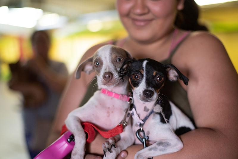 latina woman holding two small matching dogs