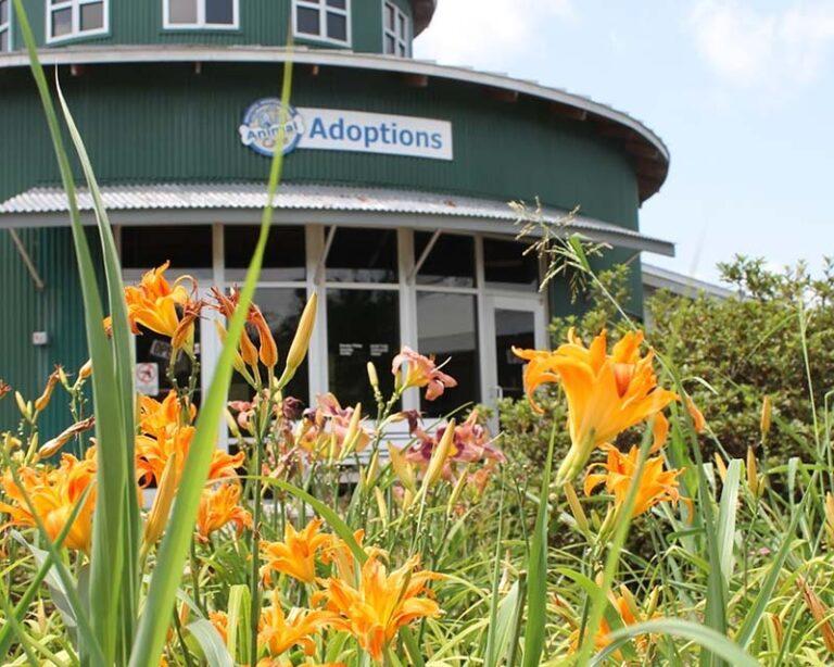 Greenville Animal Building