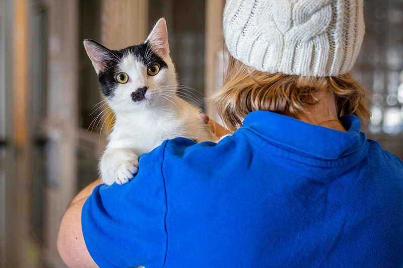woman in blue shirt holding black and white cat