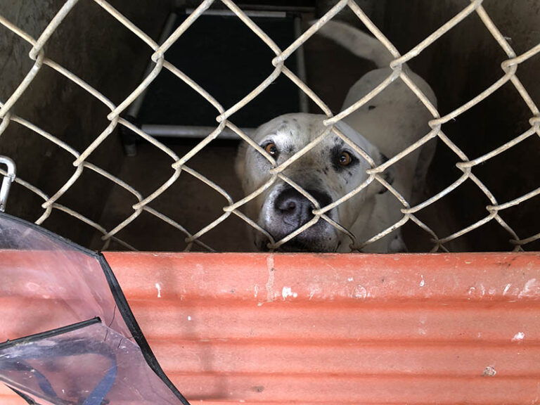 White speckled dog in a kennel