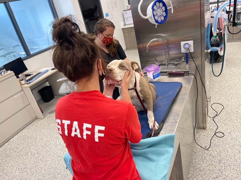 Mugsy with staff in the clinic