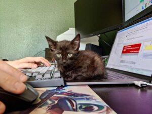 Black kitten sitting on a laptop