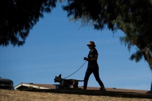 A volunteer at Pima Animal Care Center takes a dog for a walk.