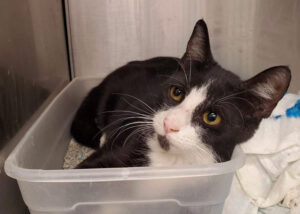 Sammy was a friendly tuxedo cat who entered a shelter with a 30% live release rate. We could not find a rescue partner who could accommodate more cats and he was euthanized before we found placement.