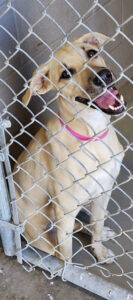 Tan Girl was reported to be sweet and happy. She was one year old. She was euthanized upon the expiration of her stray hold, when rescue could not get her out in time.