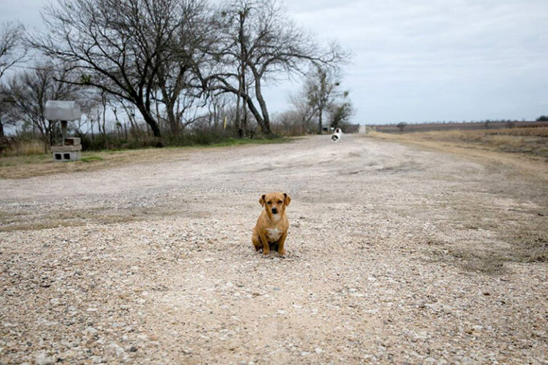 small lost brown dog on dirt road