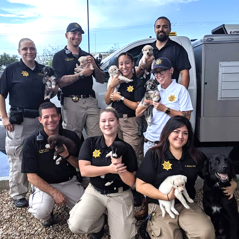 Pima animal protection officers with puppies