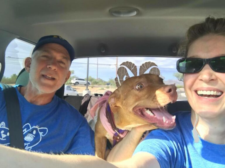Happy dog in car with two people
