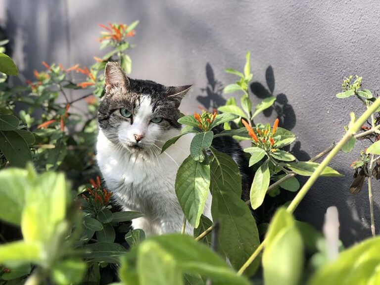 Grey and white cat sitting in plants in front of a grey wall.