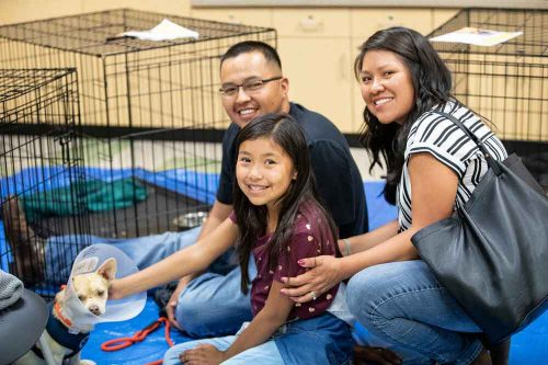 Dog Foster family