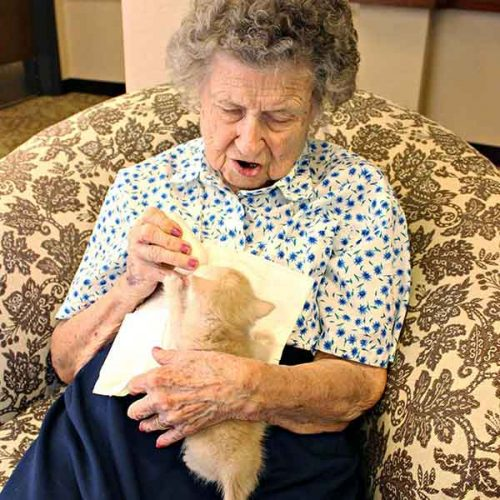 elderly woman feeding tiny kitten