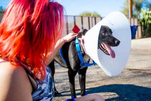 Woman with dog wearing an e-collar
