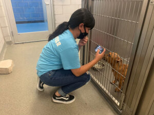 Furtographer taking a photo of a dog in the shelter