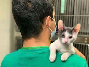 Volunteer holding a cat