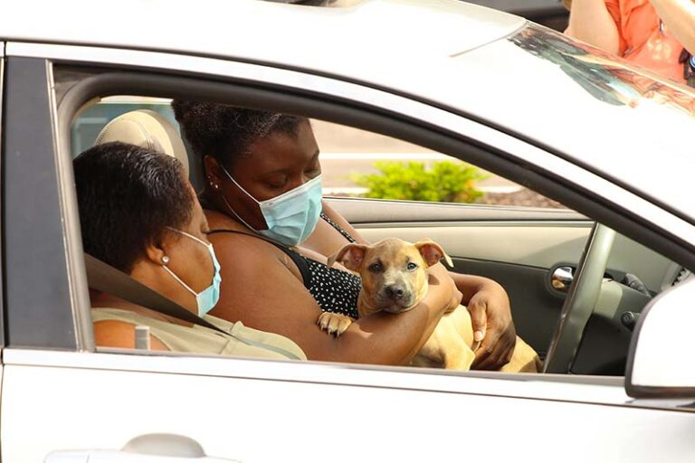 Two black women in a car holding a dog - Overcoming Adoption Barriers: Where Marketing Meets Policy