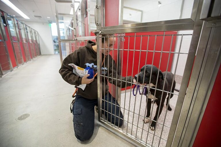 shelter staff letting dog out of kennel - Twelve Ways to Reduce Your Kennel Census Now